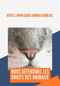 Sauvetage des chats de l'un des plus grands camps de roms de France