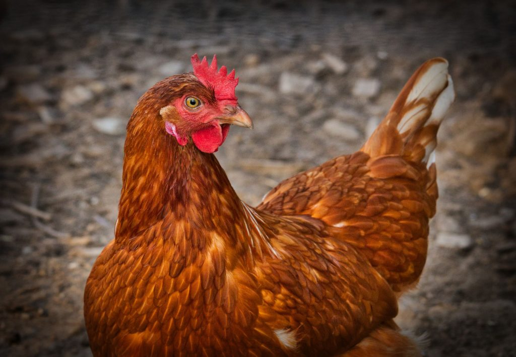 Les animaux, des êtres vivants doués de sensibilité